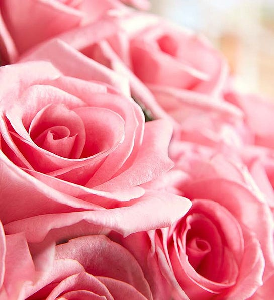 Pembe Yapraklı Güller